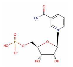 β-烟酰胺单ballbet贝博下载